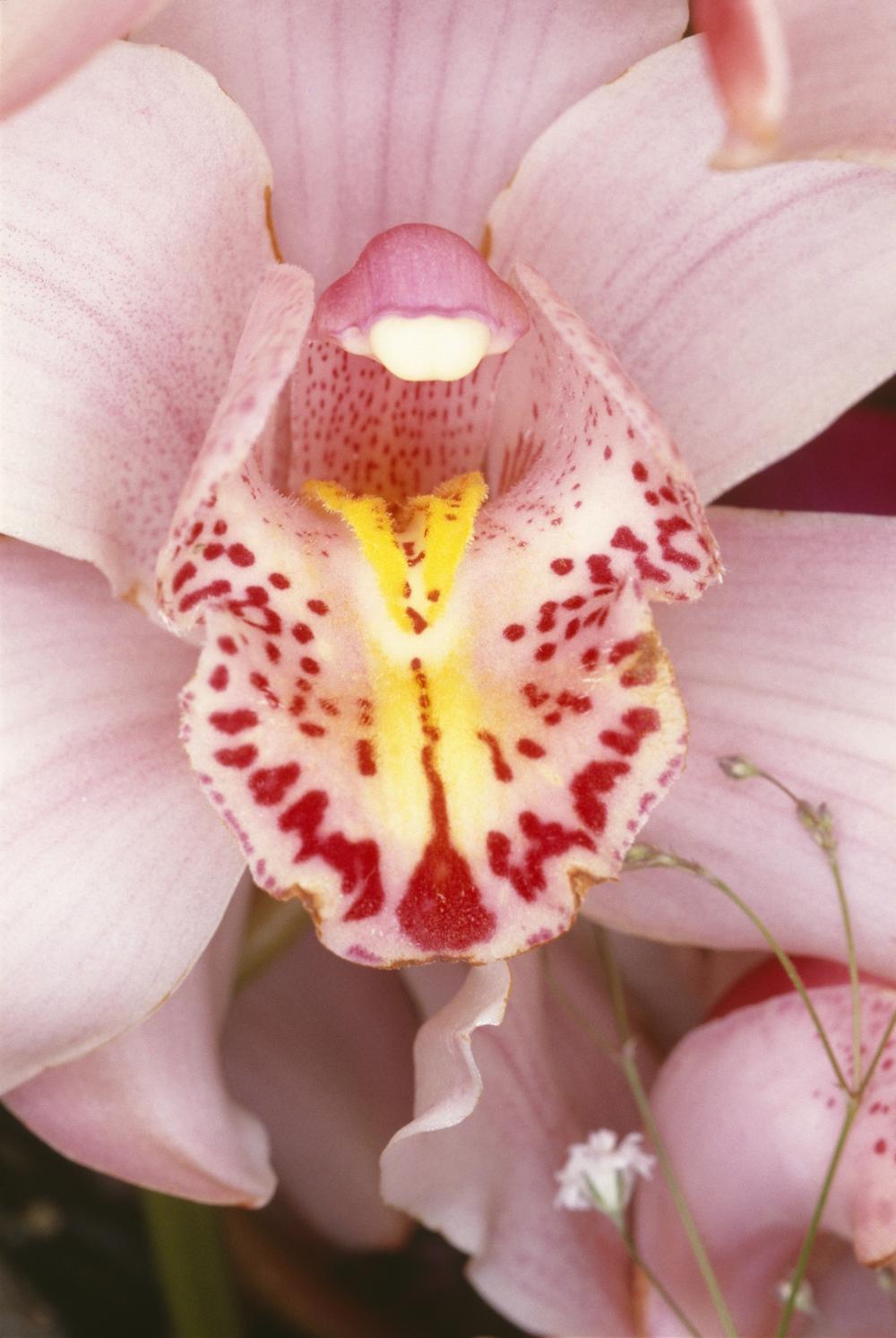 Erotic flowers