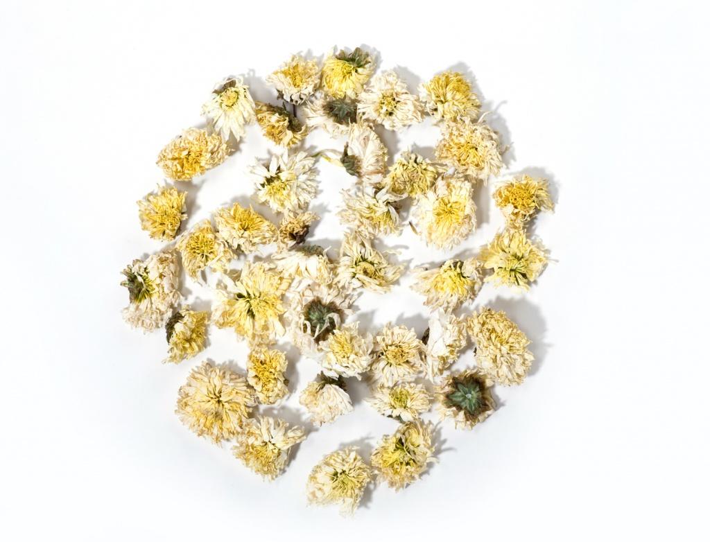 Le chrysanth me une fleur pas comme les autres la joie - Chrysantheme entretien ...