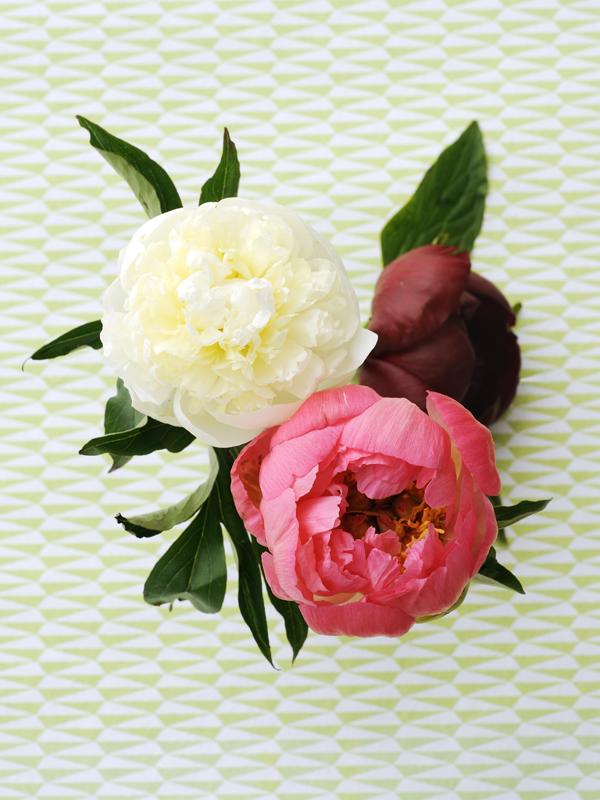 pivoine d licieuse la joie des fleurs. Black Bedroom Furniture Sets. Home Design Ideas