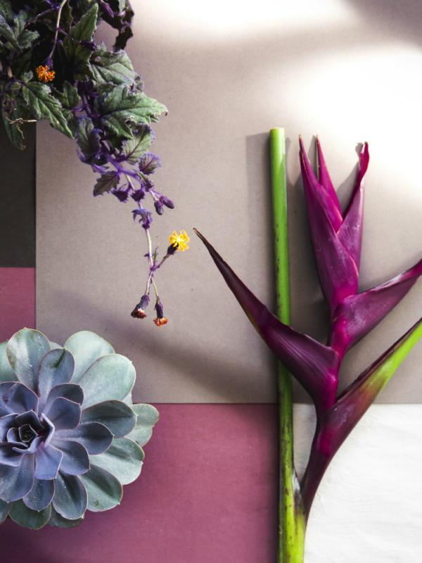Fleurs graphiques Lajoiedesfleurs.fr
