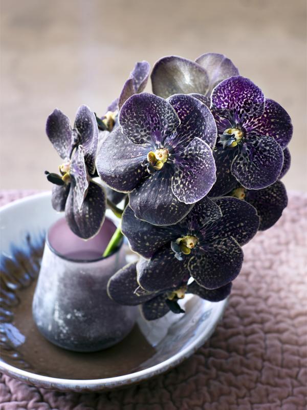 Orchidée Lajoiedesfleurs.fr