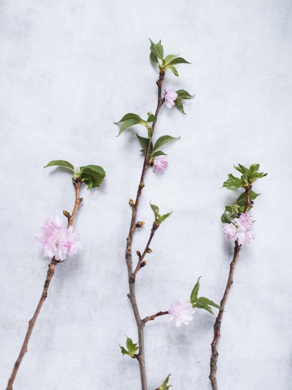 Floraison printanière Lajoiedesfleurs.fr