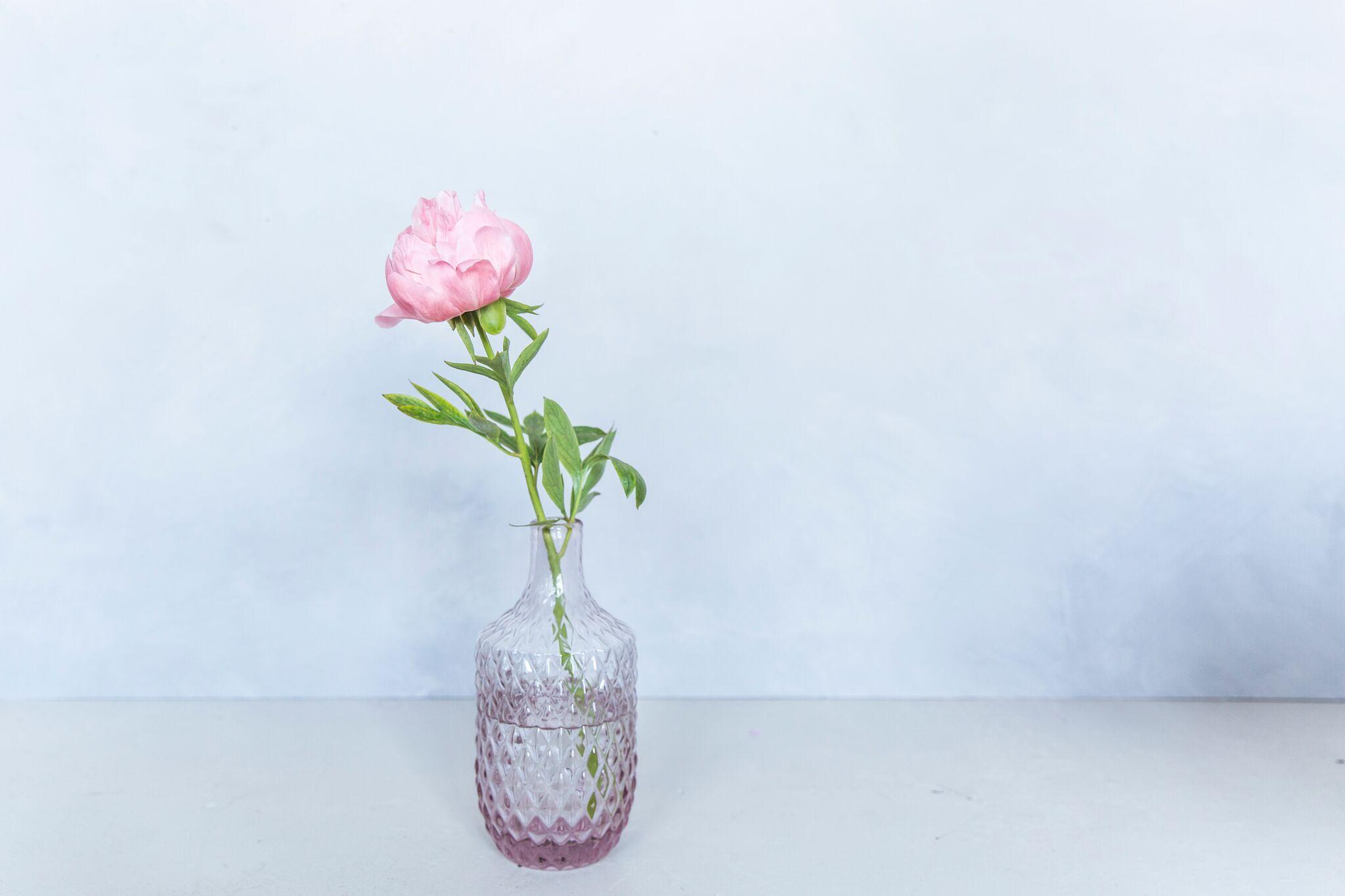 Think pink le pouvoir des pivoines la joie des fleurs for Site de fleurs